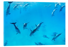Vetro acrilico  Dolphins Swimming in the Ocean, Amazing Underwater View