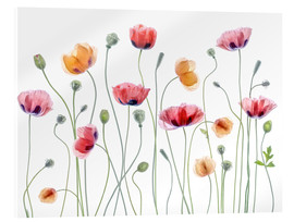 Vetro acrilico  Papaver Party - Mandy Disher