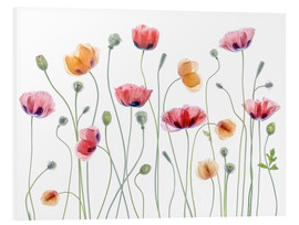 Forex  Papaver Party - Mandy Disher