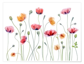 Poster Premium  Papaveri in festa - Mandy Disher
