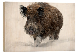 Legno  Wild boar - Louise Murray