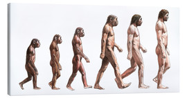 Tela  Timeline of human evolution, artwork - Lionel Bret