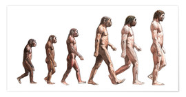 Poster Premium  Timeline of human evolution, artwork - Lionel Bret