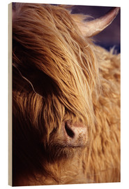 Legno  Scottish highlander - Louise Murray