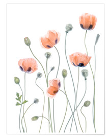 Poster Premium  Poppy poetry - Mandy Disher