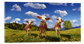 Stampa su vetro acrilico  Cows on the pasture - Michael Rucker