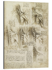 Alluminio Dibond  Muscles of the Spine - Leonardo da Vinci