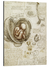 Alluminio Dibond  Studies Of Embryos - Leonardo da Vinci