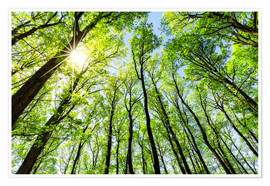 Poster Premium Green forest in spring in the sunlight