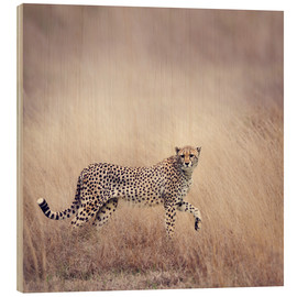 Stampa su legno  Cheetah on the hunt