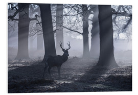 Schiuma dura  A male red deer stag waits in the early morning mists of Richmond park, London. - Alex Saberi