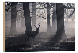 Stampa su legno  A male red deer stag waits in the early morning mists of Richmond park, London. - Alex Saberi