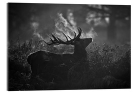 Stampa su vetro acrilico  A large male deer stag bellows out in a cold winter landscape of Richmond park, London. - Alex Saberi