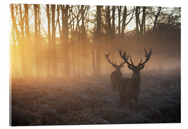 Vetro acrilico  Two deer stags in a misty forest in Richmond park, London. - Alex Saberi