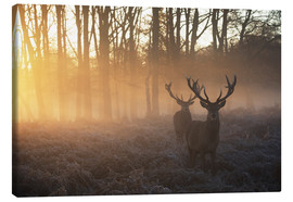 Stampa su tela  Two deer stags in a misty forest in Richmond park, London. - Alex Saberi