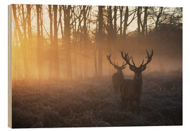 Stampa su legno  Two deer stags in a misty forest in Richmond park, London. - Alex Saberi