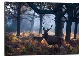 Stampa su alluminio  A red deer stag in a misty forest in Richmond park, London. - Alex Saberi