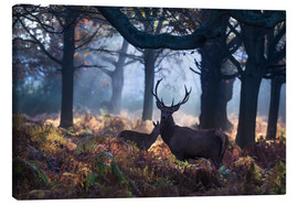 Stampa su tela  A red deer stag in a misty forest in Richmond park, London. - Alex Saberi