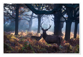 Poster  A red deer stag in a misty forest in Richmond park, London. - Alex Saberi