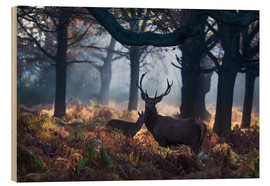 Legno  A red deer stag in a misty forest in Richmond park, London. - Alex Saberi