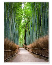 Poster Premium  Bamboo Forest in Kyoto Sagano Arashiyama, Japan - Jan Christopher Becke