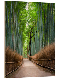 Legno  Bamboo Forest in Kyoto Sagano Arashiyama, Japan - Jan Christopher Becke