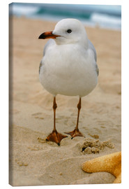 Tela  Seagull in the sand