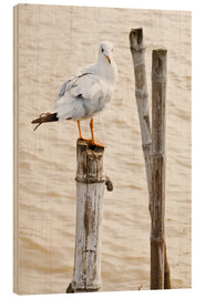 Stampa su legno  Seagull on pole