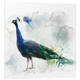 Peacock of the page