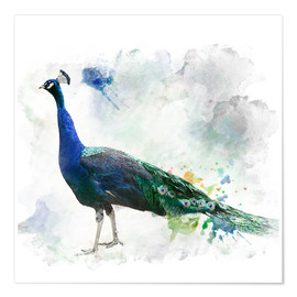 Poster Premium  Peacock of the page