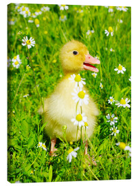 Stampa su tela  Duckling on flowery meadow
