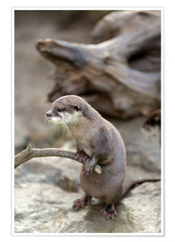 Poster Premium  Otter with walker
