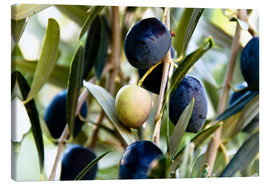 Stampa su tela  Olives on branch