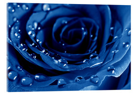 Stampa su vetro acrilico  Blue Roses with Water Drops
