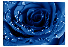 Stampa su tela  Blue Roses with Water Drops