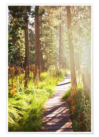 Poster Premium Path through the forest