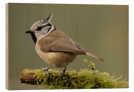 Stampa su legno  Crested Tit in Moos - Uwe Fuchs