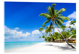 Vetro acrilico  Palm beach in the South Pacific with white sand and blue sea - Jan Christopher Becke