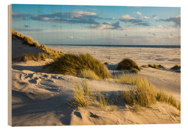 Legno  Landscape with dunes on the North Sea island Amrum - Rico Ködder