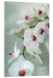 Stampa su vetro acrilico  Composition of a white orchid with transparent texture - Alaya Gadeh