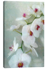 Tela  Composition of a white orchid with transparent texture - Alaya Gadeh
