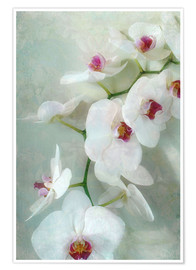 Poster Premium  Composition of a white orchid with transparent texture - Alaya Gadeh