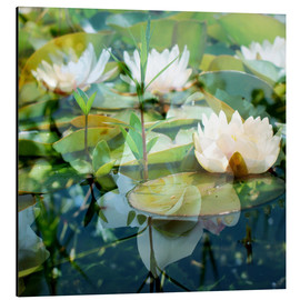 Stampa su alluminio  Montage of white water lilies - Alaya Gadeh