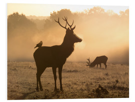 Forex  A Red deer with Western jackdaw in London Richmond Park - Alex Saberi