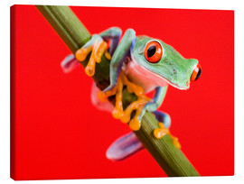 Stampa su tela  Tree frog on red