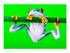 Poster Premium  colorful frog on green