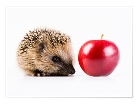Poster Premium  Hedgehog and apple