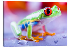 Stampa su tela  colorful frog