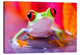 Stampa su tela  little green frog