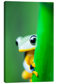 Stampa su tela  yellow tree frog